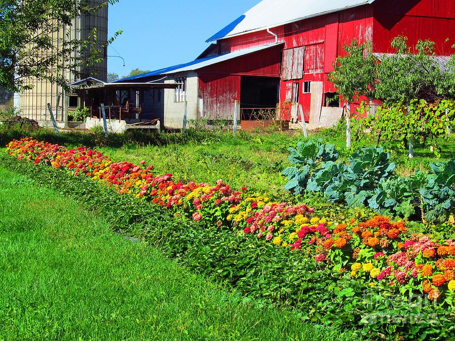 Barns Photograph - Barn And Garden by Tina M Wenger