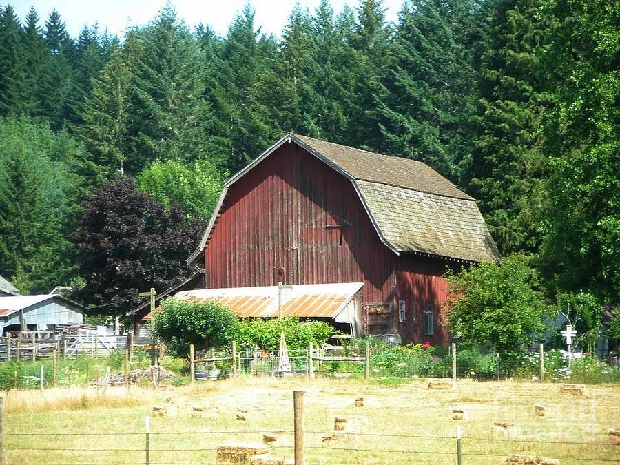 Barn Photograph - Barn In Summer by Liz Snyder