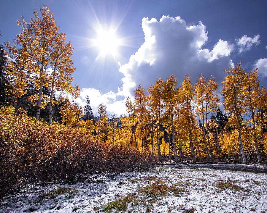 Barn Meadow Aspens by Mark Robert Bein