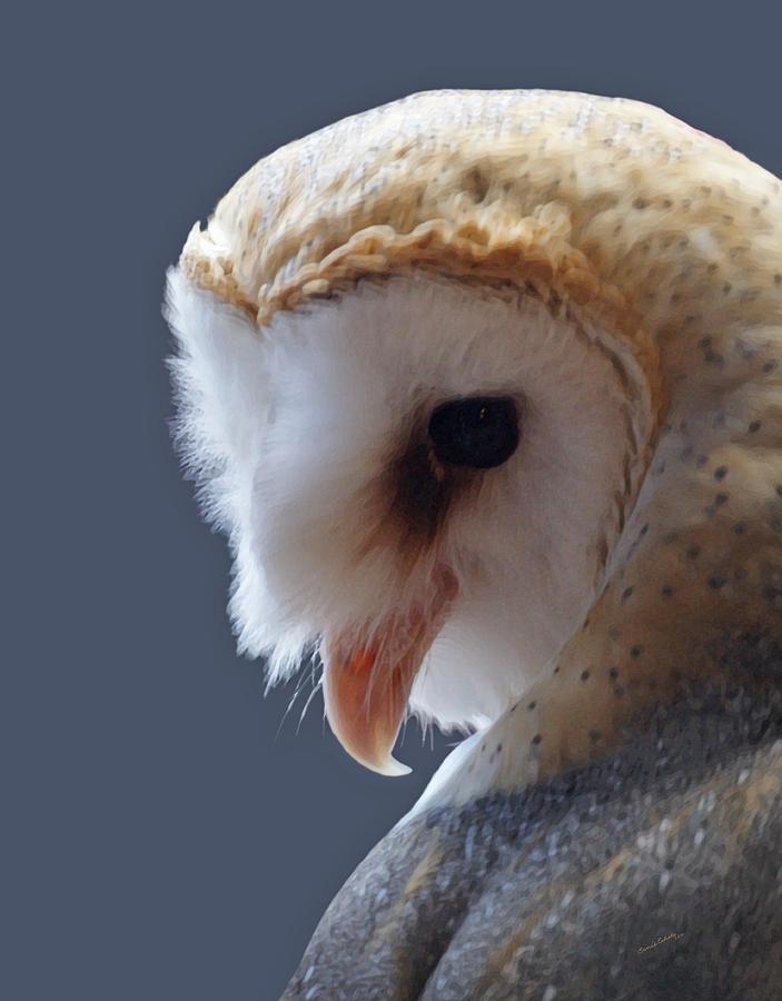 Barn Owls Digital Art - Barn Owl Dry Brushed by Ernie Echols