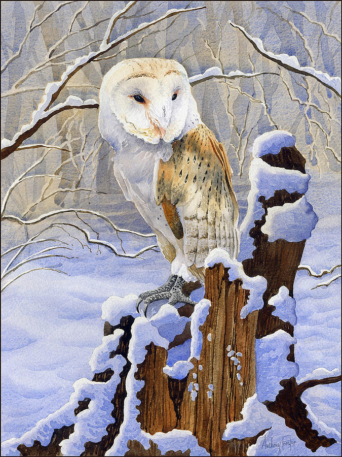 Owl Painting - Barn Owl In Snow by Anthony Forster