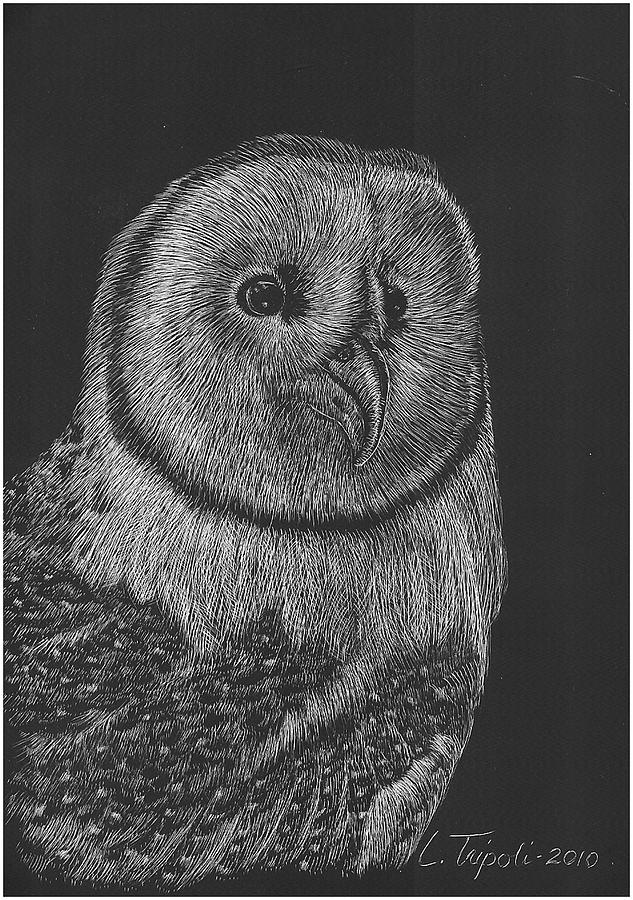 Wildlife Drawing - Barn Owl by Lawrence Tripoli