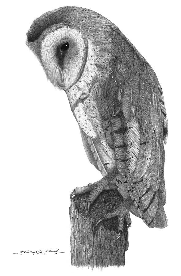 Barn Owl Drawing by Michael Kreizel