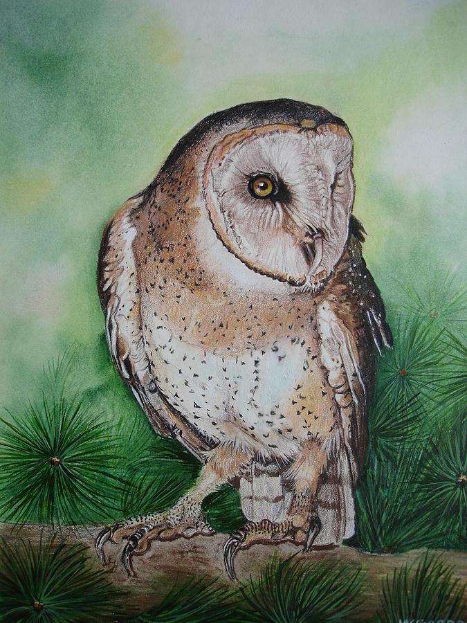 Barn Owl Drawing by Wendy Gordon-Forsyth
