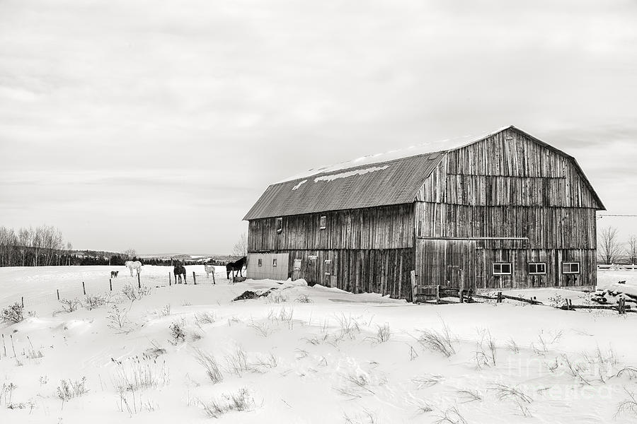Barn Photograph - Barn Quebec Province In  Black And White by Jane Rix