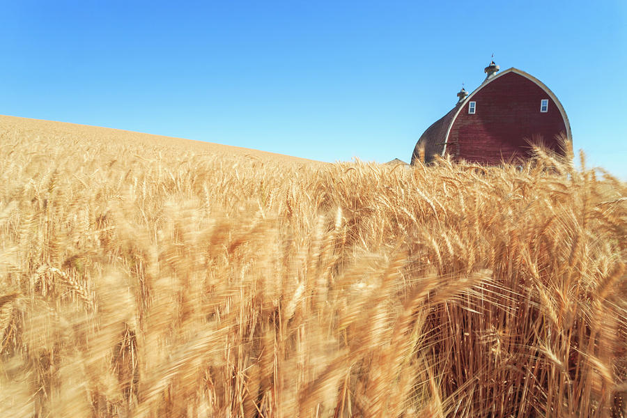 Agriculture Photograph - Barn, Summer Wheat Fields Near Sprague by Stuart Westmorland