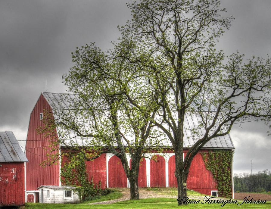 Barn with Ivy by Elaine Farrington Johnson
