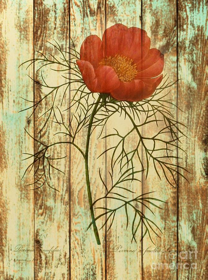 Trendy Drawing - Barn Wood Texture Poppy Flower Botanical Art by Cranberry Sky
