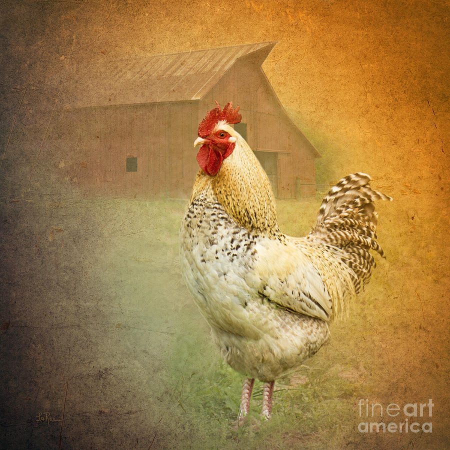 Rooster Photograph - Barnyard Boss by Betty LaRue