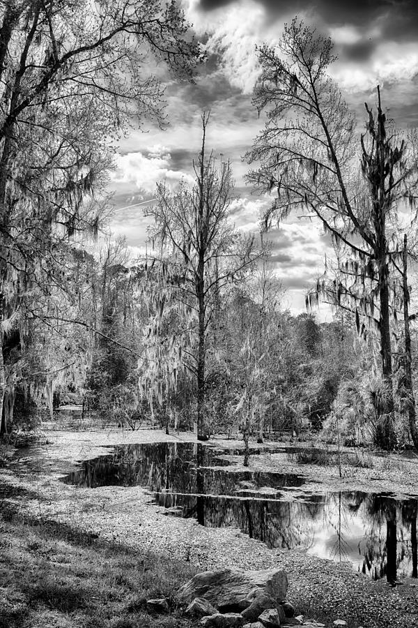 Nature Photograph - Barr Hammock Preserve  by Howard Salmon