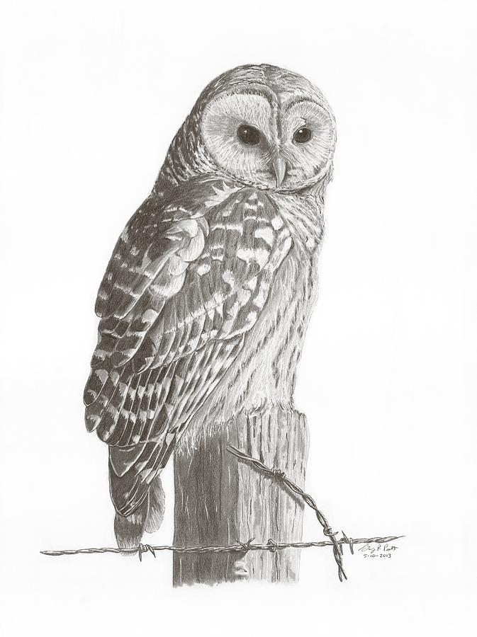 It's just a graphic of Peaceful Barred Owl Drawing