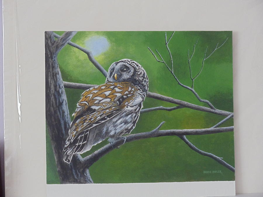 Bird In Tree Painting - Barred Owl by James Lawler
