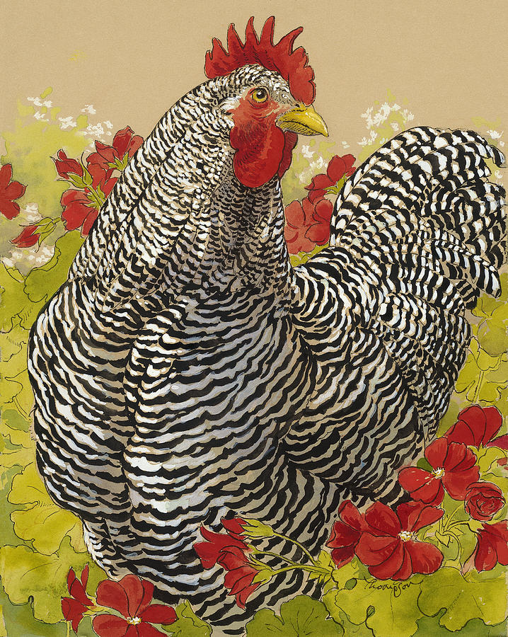Chicken Painting - Barred Rock Rooster In The Geraniums by Tracie Thompson