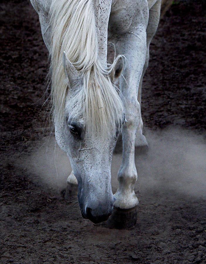 Horse Photograph - Basic Instincts by Joachim G Pinkawa