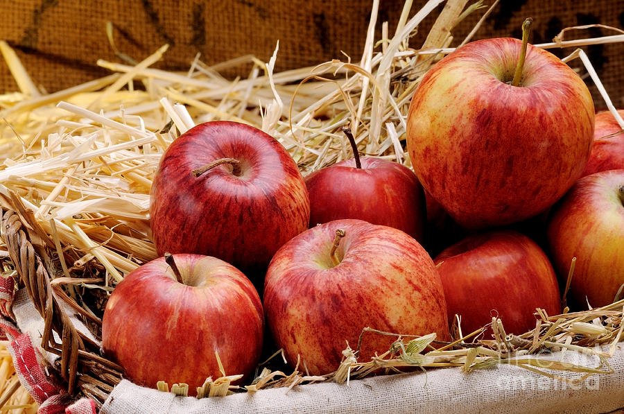 Antioxidant Photograph - Basket Of Delicious Red Apples by Bruno DAndrea
