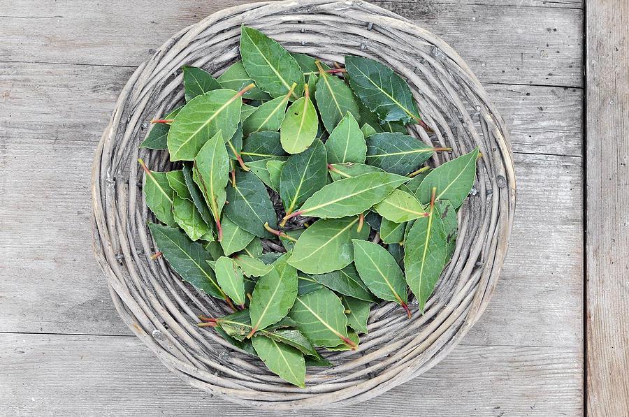 Basket Of Fresh Green Leaves Photograph by Carina Tjarnlund