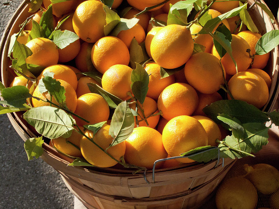 Basket Of Fresh Picked Oranges Photograph by Bill Boch