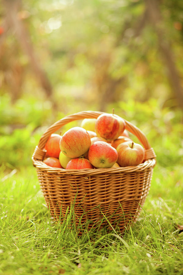 Basket With Apples Photograph by Tatyana Tomsickova Photography