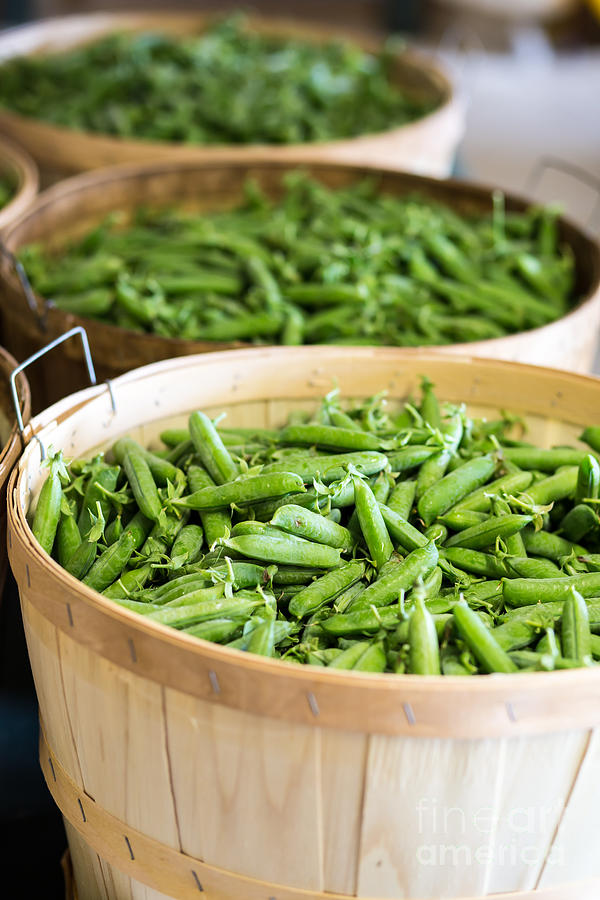 Greens Photograph - Baskets Of Fresh Picked Peas by Edward Fielding