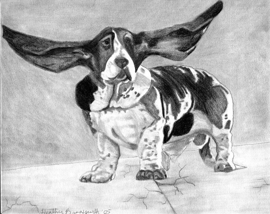 Basset Artesien Normand Dog Portrait Drawing by Olde Time  Mercantile