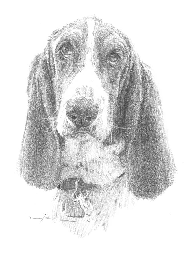 Basset Hound Pencil Portrait Drawing by Mike Theuer