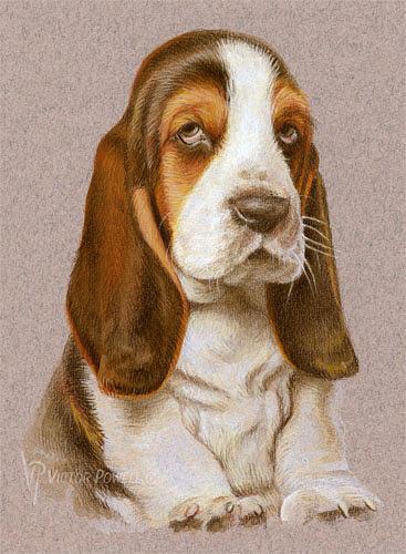 Bassett Hound Mixed Media - Bassett Hound Puppy Portrait by Victor Powell
