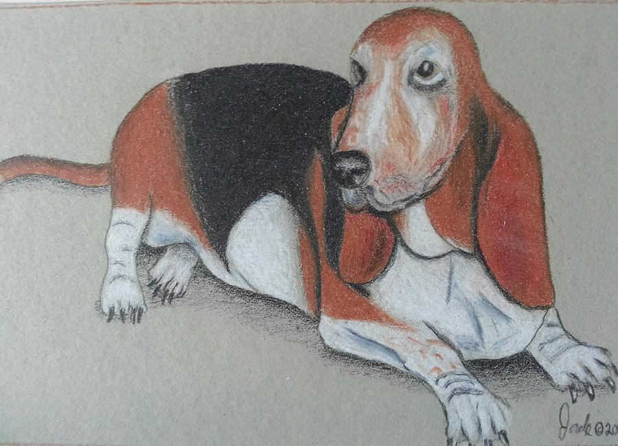 Animal Drawing - Bassett Puppy by Steve Jorde