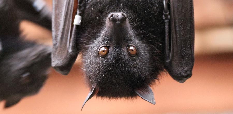 Bat Eyes Photograph by Dan Sproul