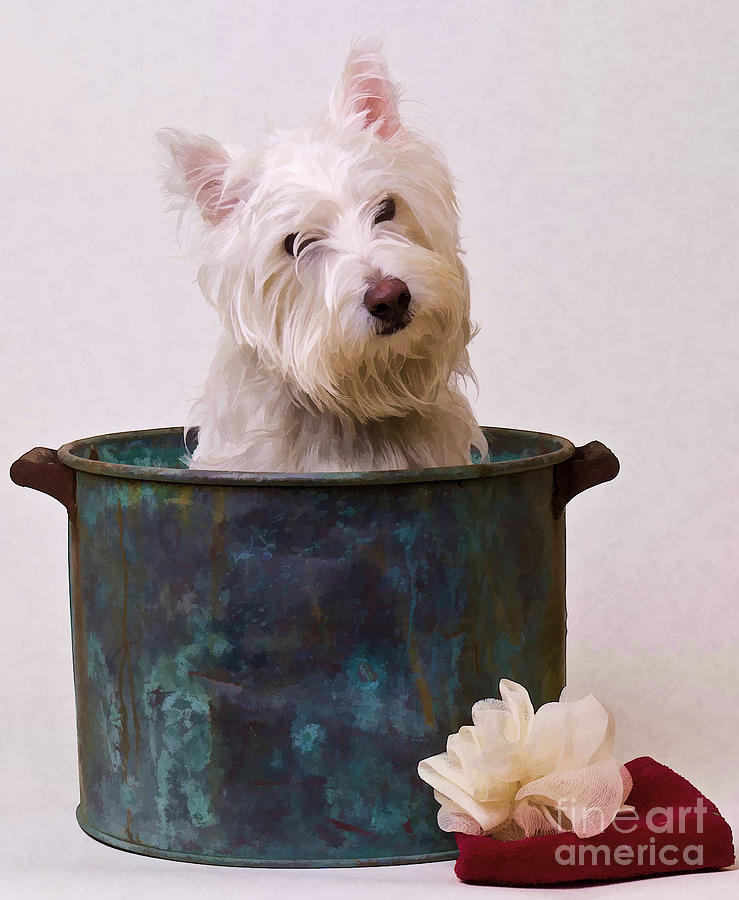 Dog Photograph - Bath Time Westie by Edward Fielding