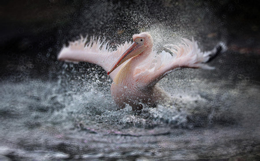 Wings Photograph - Bathing Fun ..... by Antje Wenner-braun
