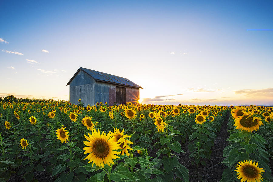 the sunflower essay I had to consider the origins of the holocaust, its development, how nazis became nazis, why nazis could execute orders without question engl 101 sunflower essay viewing now.