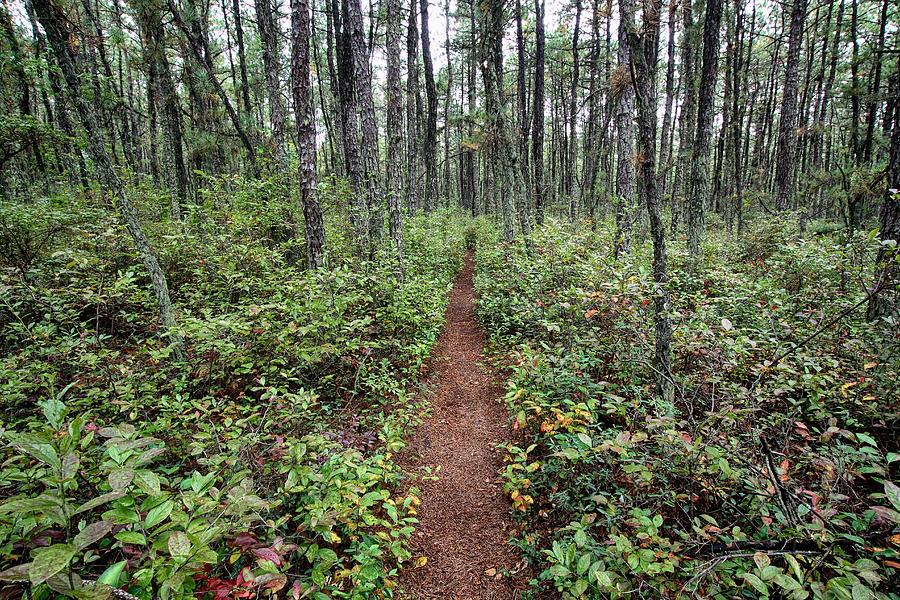 New Jersey Photograph - Batona Trail by Dawn J Benko