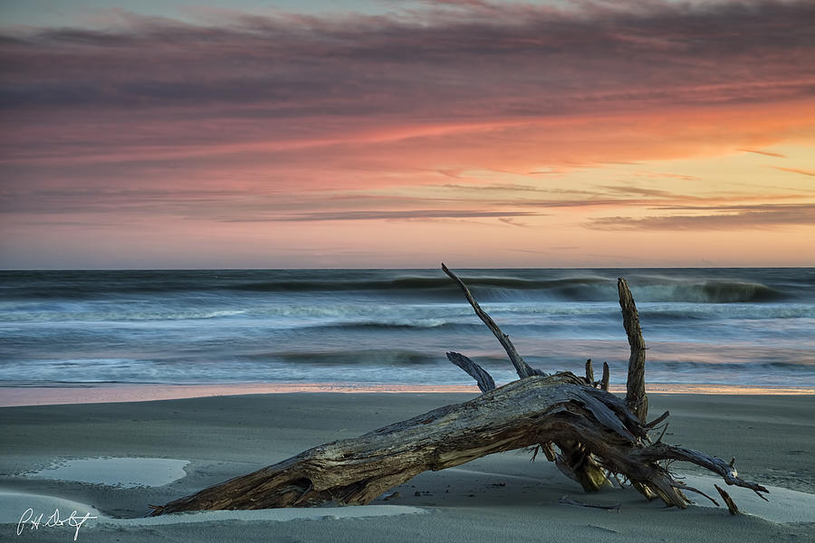 Beach Photograph - Battered Driftwood by Phill Doherty