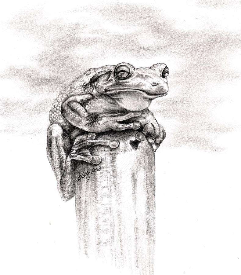 Frog Drawing - Batting Coach by Kathleen Kelly Thompson
