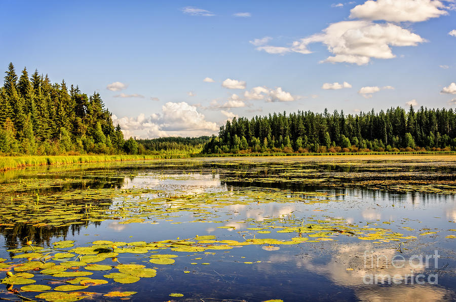 Landscape Photograph - Bay At The Waskesiu Lake With Lily by Viktor Birkus