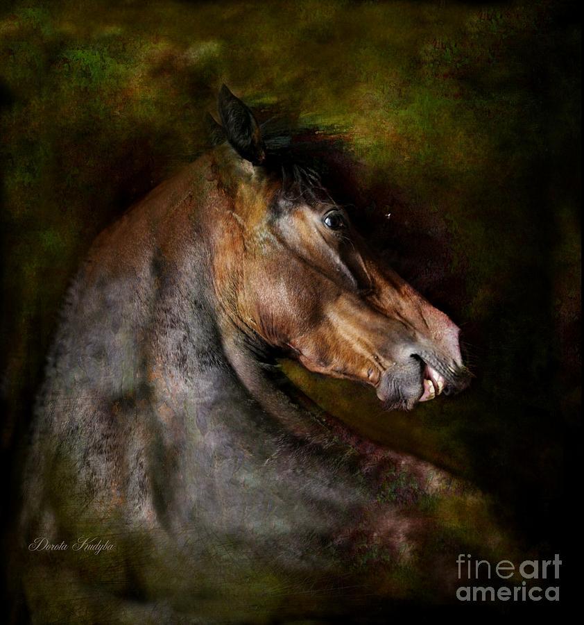 Horse Photograph - Bay Dignity by Dorota Kudyba