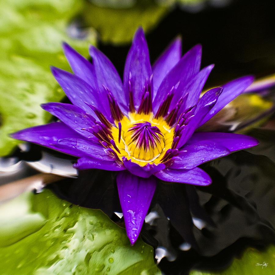 Lotus Photograph - Bayou Beauty by Scott Pellegrin