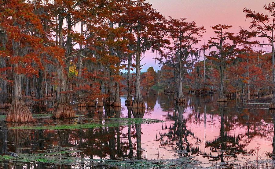 Bayou Photograph - Bayou Early Evening by Ester McGuire