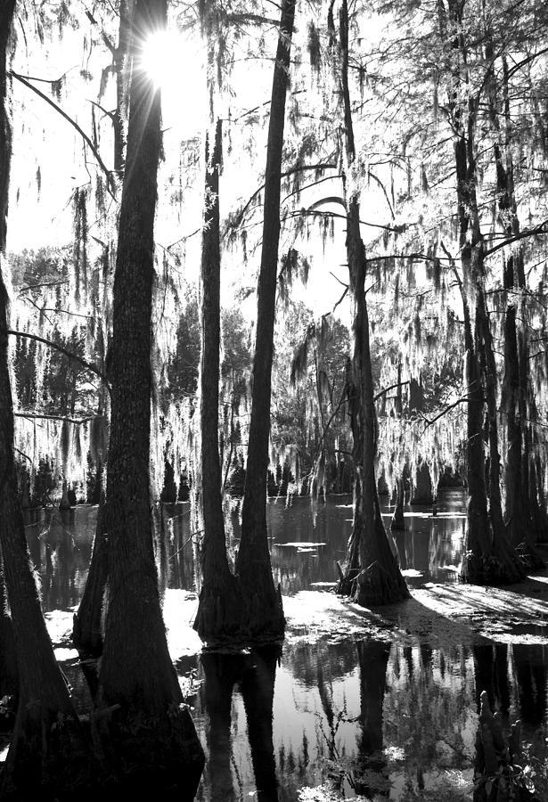 Bayou Photograph - Bayou by Jessica Wakefield