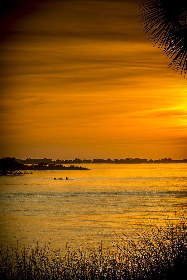Bayport Dolphins Photograph - Bayport Dolphins by Marvin Spates