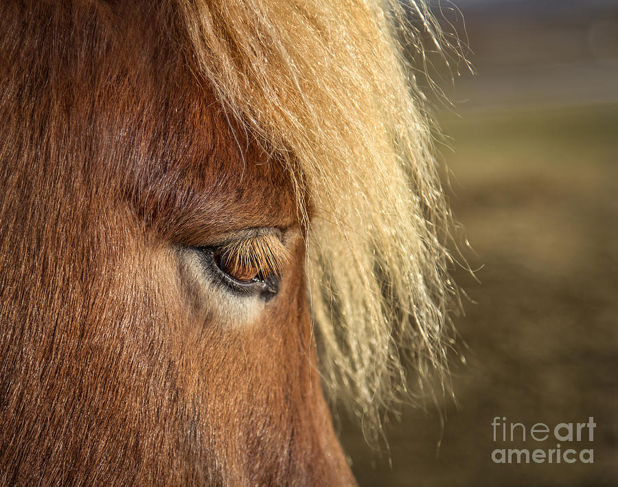 Iceland Photograph - Be A Light To Yourself by Evelina Kremsdorf