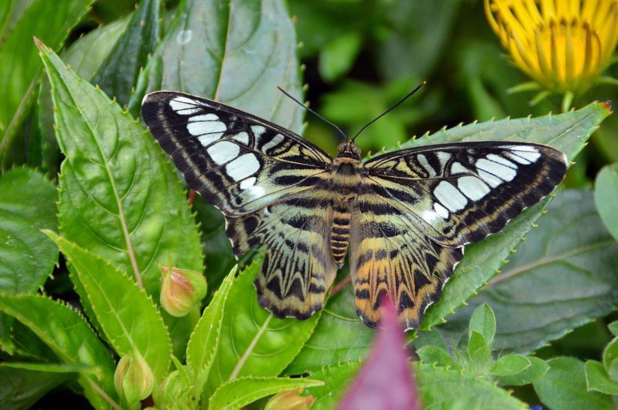 Butterflies Photograph - Be Grateful by David Earl Johnson