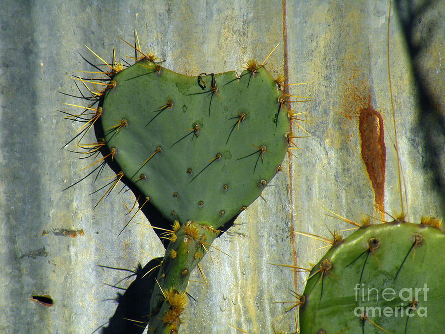 Valentine Photograph - Be My Valenspine by Joe Pratt