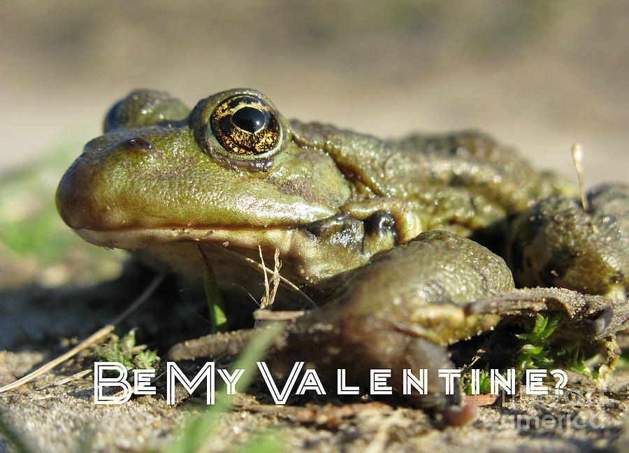 Funny Photograph - Be My Valentine by Ausra Huntington nee Paulauskaite