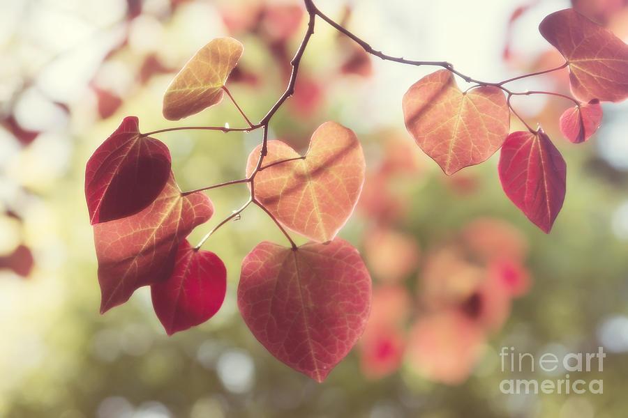 Be My Valentine by Chris Scroggins