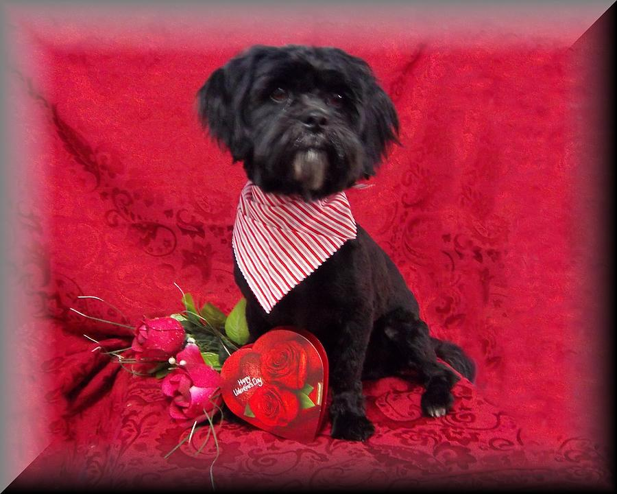 Dog Photograph - Be My Valentine by Rosalie Klidies