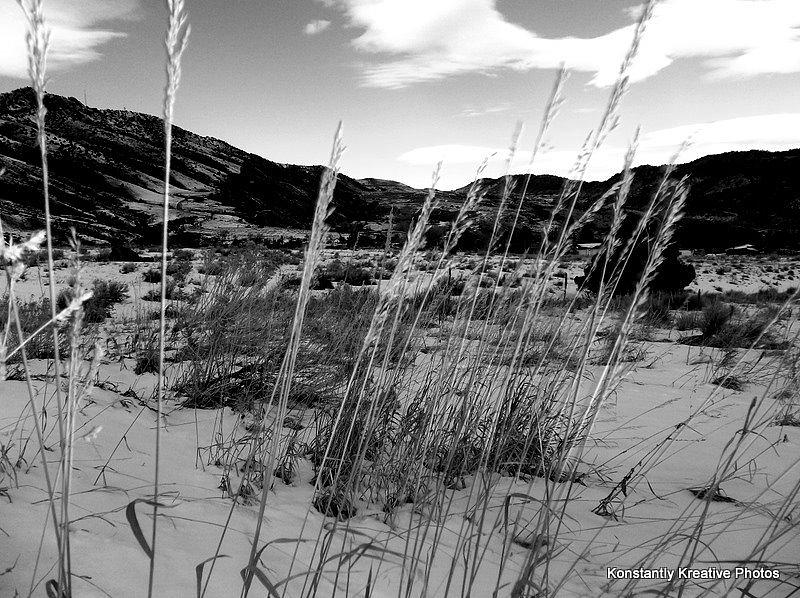 Long Photograph - Be Quiet Be Still by Misty Herrick