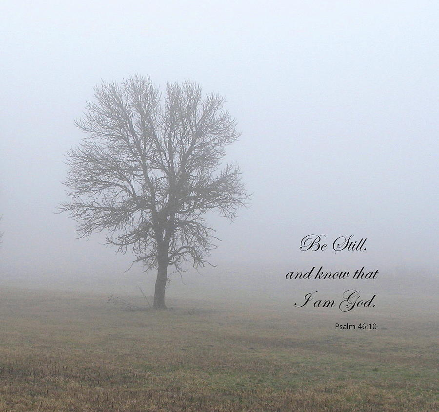 Tree Photograph - Be Still by Angie Vogel