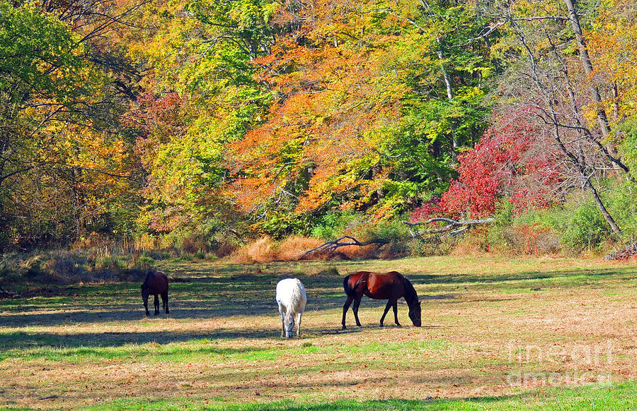 Horses Photograph - Be Still by Marian DeSalvo-Rodgers