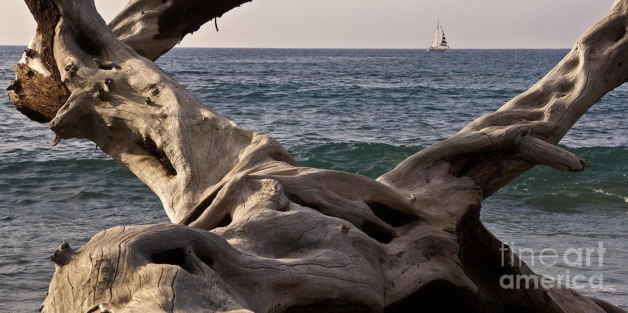 Drift Wood Photograph - Beach Art by Inge Riis McDonald